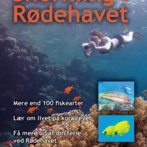 Forside af Snorkling i Rødehavet - om koralrevets almindeligste fisk